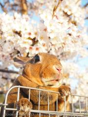 春の撮影会2014〜第二弾〜P4013214