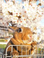 春の撮影会2014〜第二弾〜P4013215