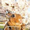 春の撮影会2014~第二弾~P4013215