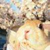 春の撮影会2014~第一弾~P4013185