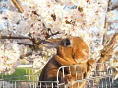 春の撮影会2014〜第二弾〜P4013212