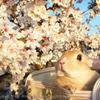 春の撮影会2014~第一弾~P4013195