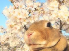 春の撮影会2014〜第二弾〜P4013207