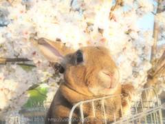 春の撮影会2014〜第二弾〜P4013219