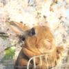春の撮影会2014~第二弾~P4013219