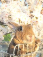 春の撮影会2014〜第二弾〜P4013218