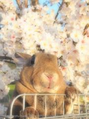 春の撮影会2014〜第二弾〜P4013217