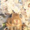 春の撮影会2014~第二弾~P4013217