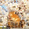春の撮影会2014~第二弾~P4013211