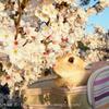 春の撮影会2014~第一弾~P4013197