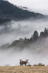 Deer Land