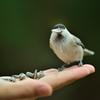 秋 研究林の鳥 5