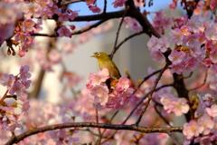 春だ春が来た。