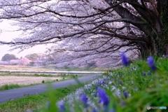 見沼田んぼの春