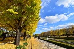 昨年の昭島記念公園