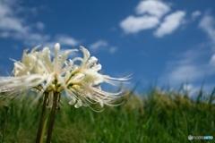 彼岸花が咲く季節に