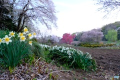 見沼田んぼの春 II