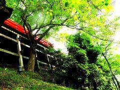 初夏の神社