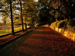 散歩の影道