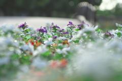 花に埋もれて癒される