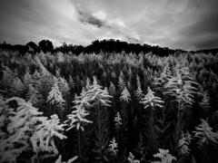 草原の煌き