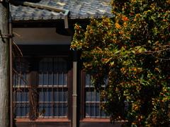 窓の金木犀
