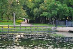 森と池と橋