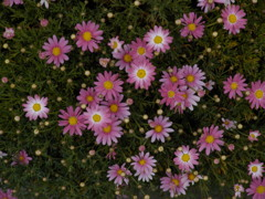 ぬくもりのある花