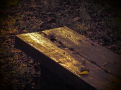 陽のあたるベンチ