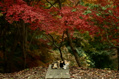秋雨の晴れ間