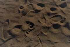 歩んだ化石