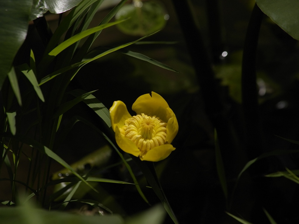 ほたるを待つ花