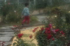 赤薔薇と少年