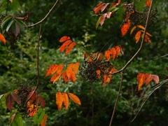 湿地の紅葉