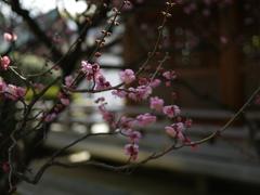 城南宮の梅の彩