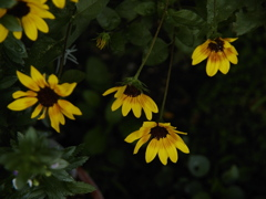 映える花弁