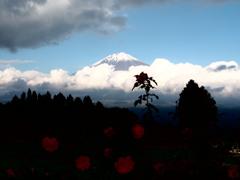 富士と薔薇園