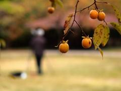 週末秋を撮る