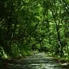 緑のルート