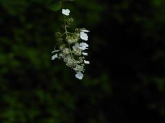 ひと房の花