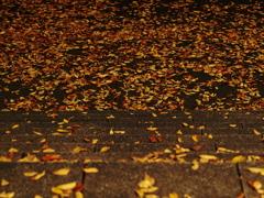 枯葉の時間