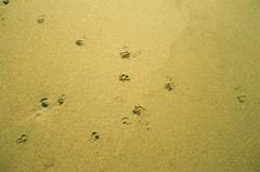 砂に描いた手