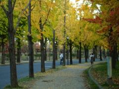 今秋の一景