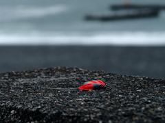 海に残されたもの