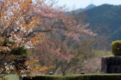 城下の残桜