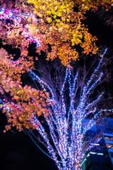 HIBIYA Magic Time illumination   No.3