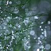 雨後の輝き