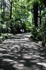 木漏れ日散歩