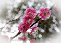 春さればまず咲く梅の花 その3