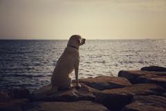 やっぱり海はいいよなぁ…